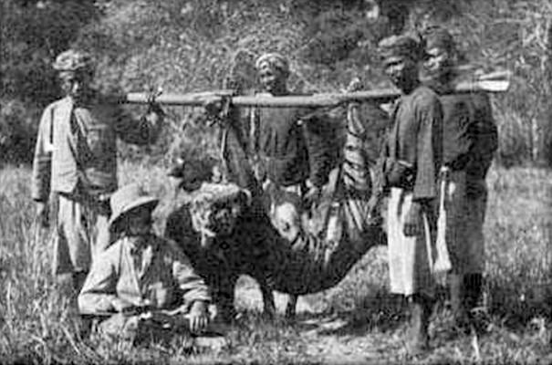 Gambar 3. Perburuan harimau bali pada tahun 1911