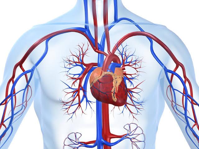 Ini 6 Manfaat Minum Air Putih Hangat Bagi Kesehatan Jantung