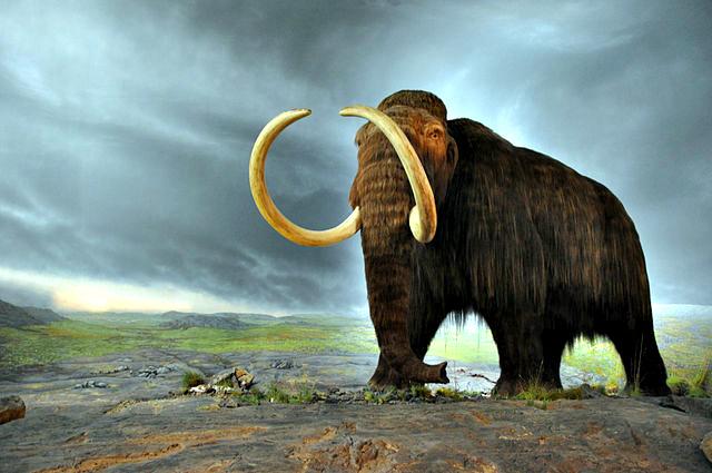 50++ Hewan bison terbesar terbaru