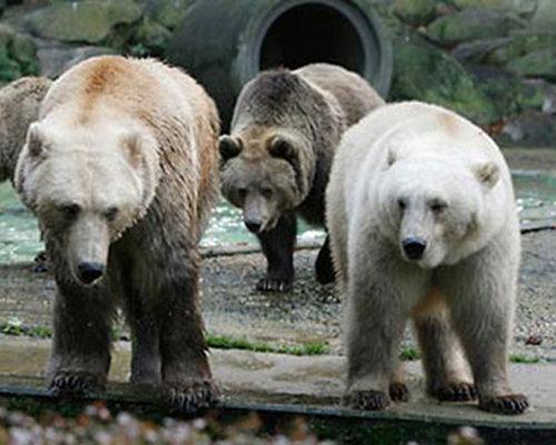 Image credit : www.boredpanda.com