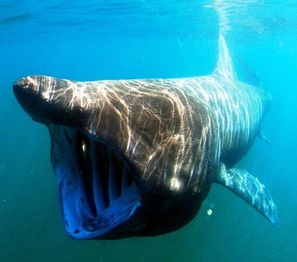 5 Binatang ini punya tampilan paling menyeramkan di dunia
