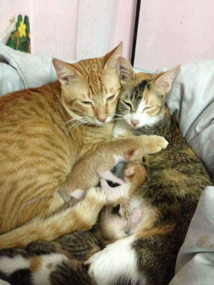 Aksi 'kocheng oren' setia dampingi pasangannya melahirkan, bikin baper