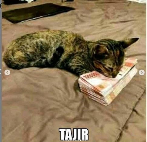 Tak cuma kocheng oren, 8 meme kucing abu-abu ini juga bikin gemas