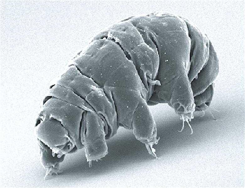 Tardigrade, hewan dari Bumi yang kemungkinan bertahan hidup di Bulan