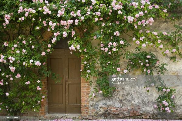 15 Rumah ini dirambati beraneka tumbuhan, bak di negeri dongeng