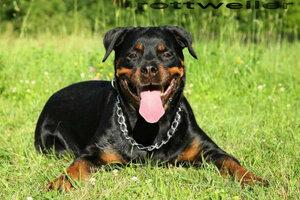Jika tak dilatih dengan benar, 5 jenis anjing ini bahaya bagi manusia