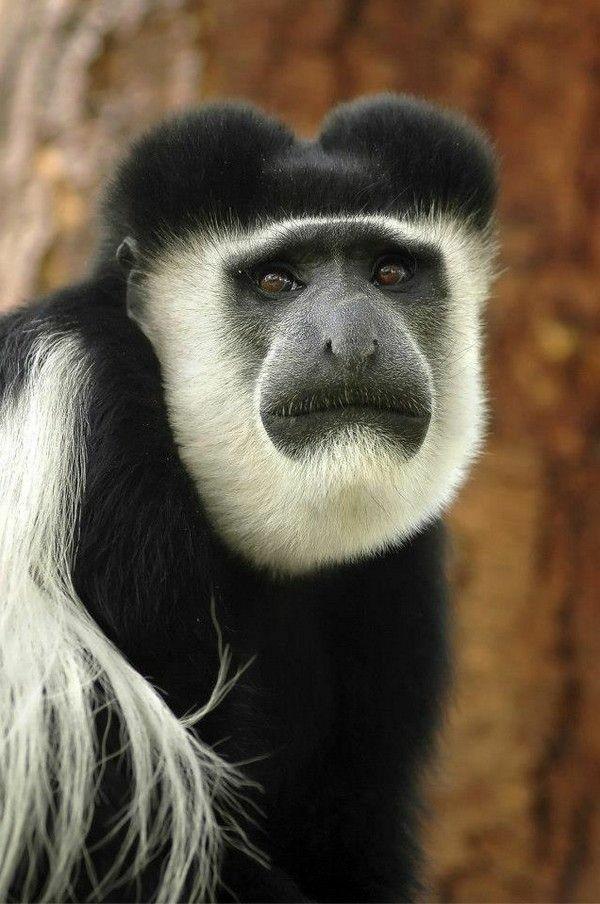 Inilah 8 hewan unik yang terdapat di Afrika