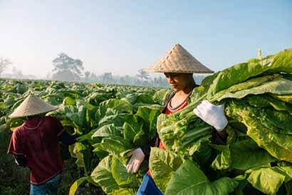 Hari Tani Nasional, ini 7 fakta mengenai pertanian di Indonesia