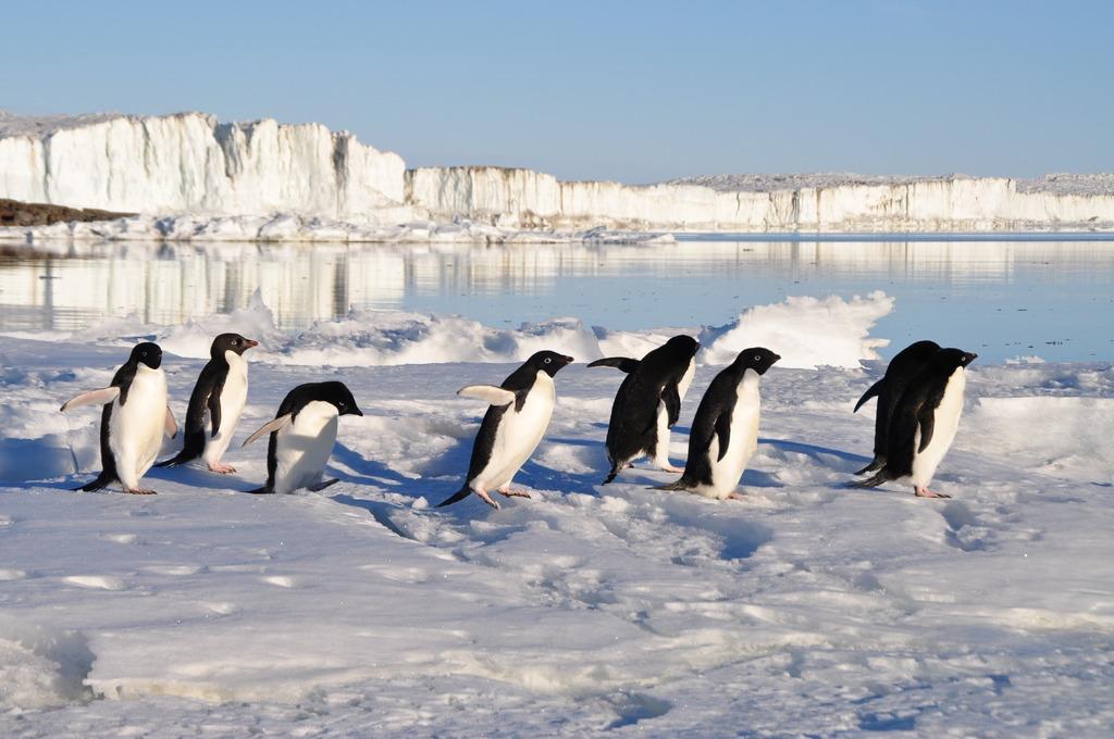 Penguin tahan dengan air garam