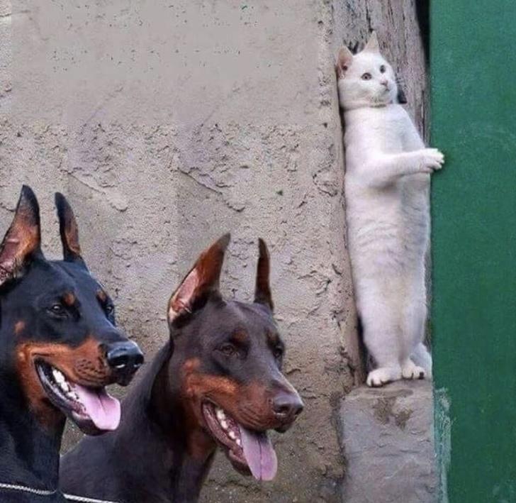 10 Foto kelakuan nyeleneh kucing! bikin mood naik