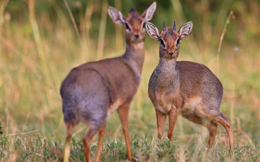 7 Hewan ini sangat setia dengan pasangannya, sehidup semati