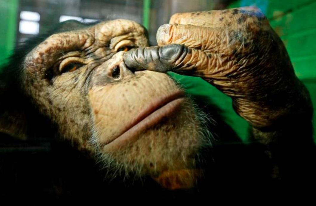 13 Potret kocak tingkah laku para hewan ini bikin ngakak