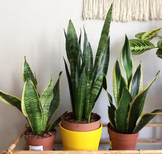 Hati-hati, 5 jenis tanaman hias cantik ini ternyata beracun