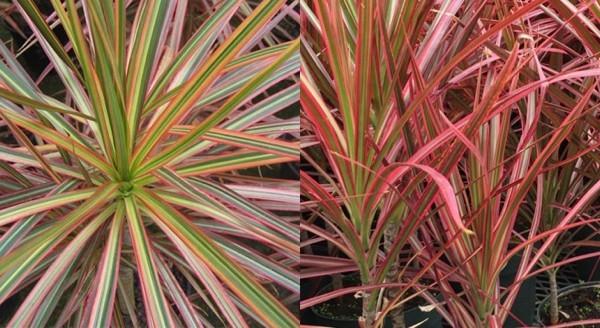 5 Jenis tanaman hias ini minim perawatan dan tak mudah mati
