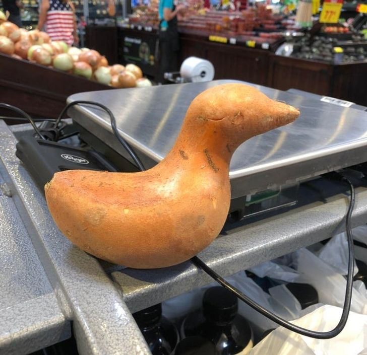 6 Sayuran ini berbentuk mirip hewan, bikin gak tega makan