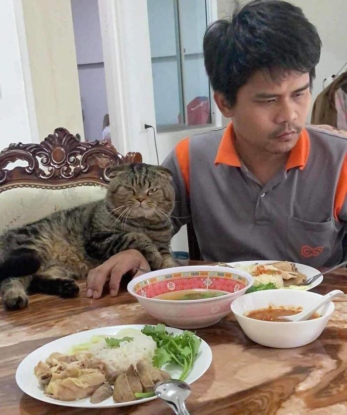 17 Potret seorang pria dan kucingnya ini bikin baper, mesra banget