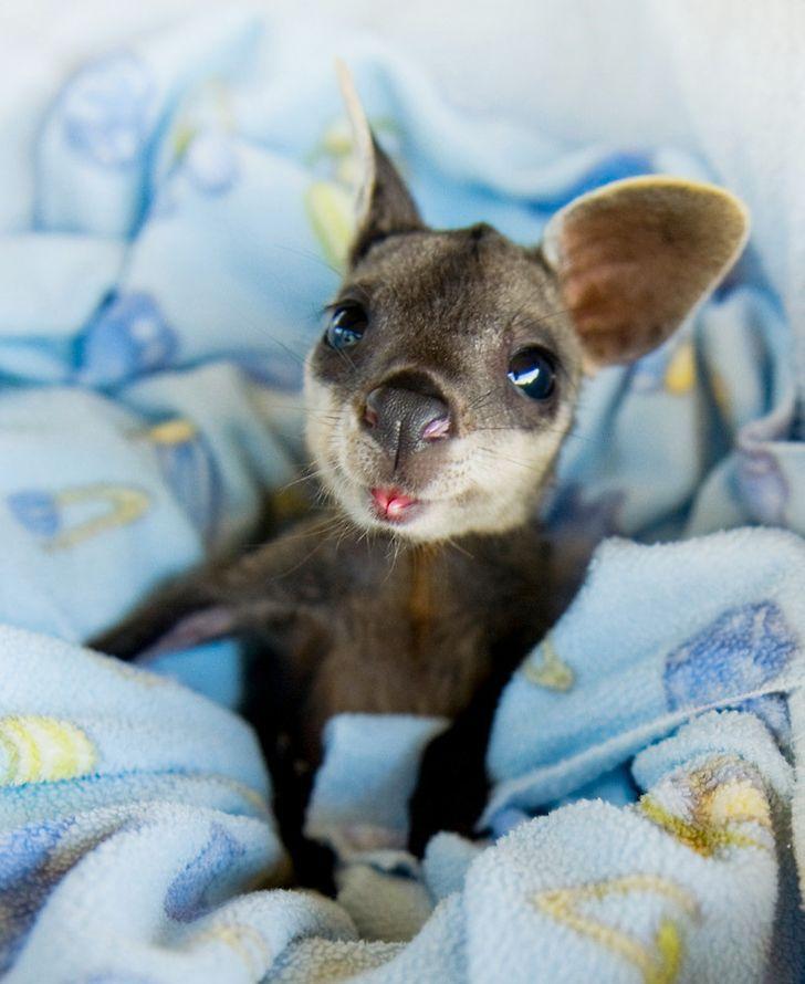 6 Foto bayi binatang ini lucu dan menggemaskan, ada bayi buaya