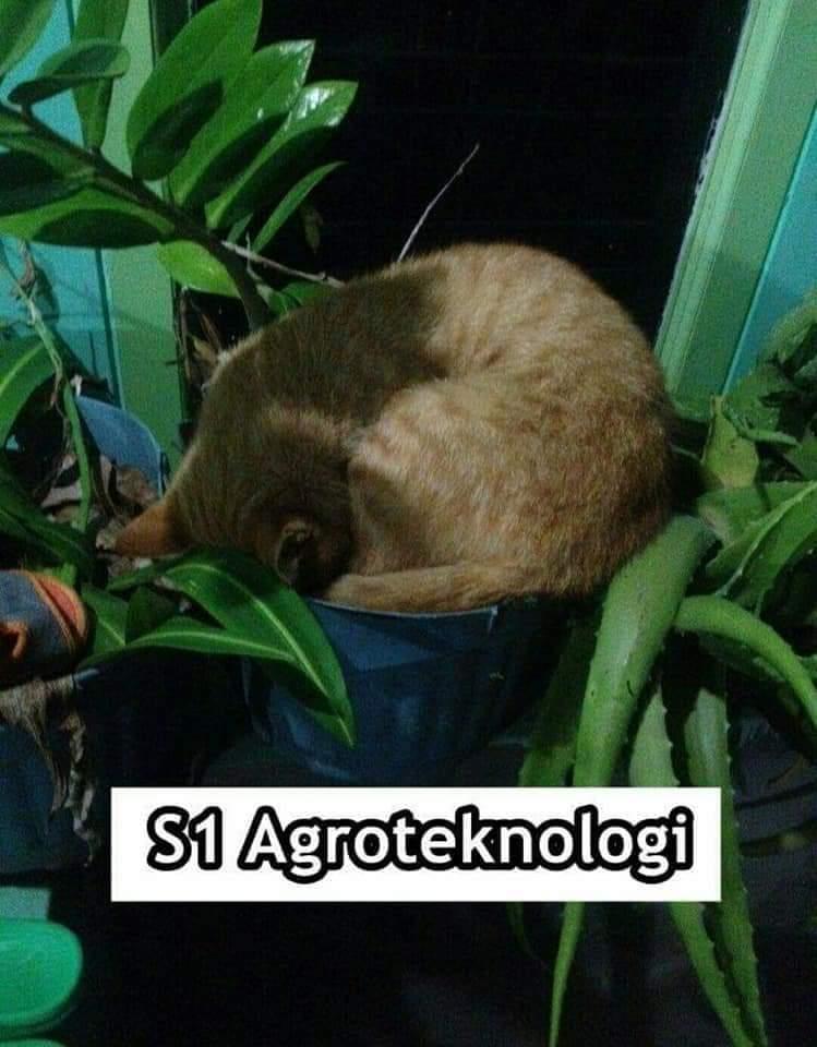 9 Meme kucing saat mengenyam perkuliahan ini bikin ngakak