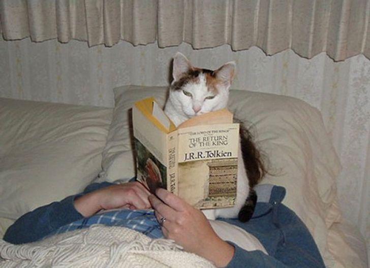 18 Tingkah lucu kucing saat mengganggu majikannya ini bikin gemas