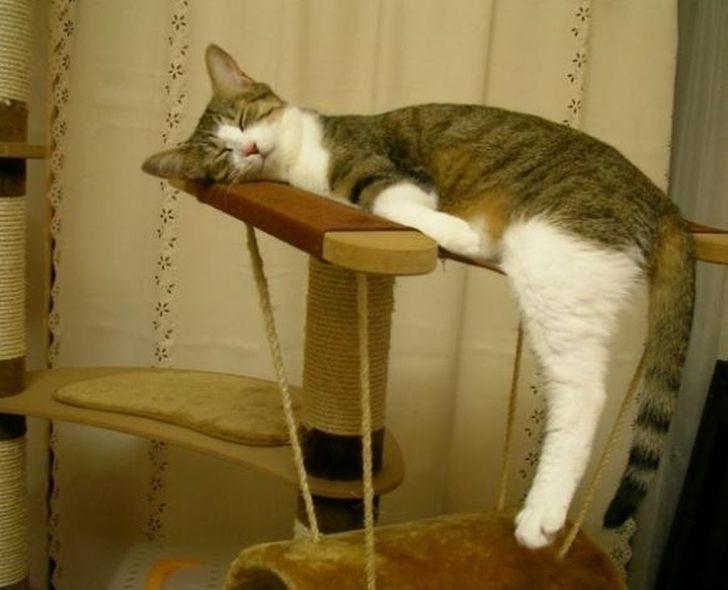 19 Pose kucing saat tidur ini bikin senyum sendiri, gemesin banget