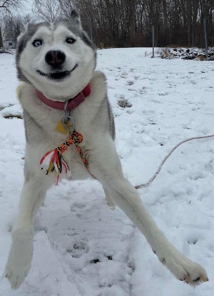 14 Ekspresi kocak hewan saat berada di salju, bikin senyum sendiri