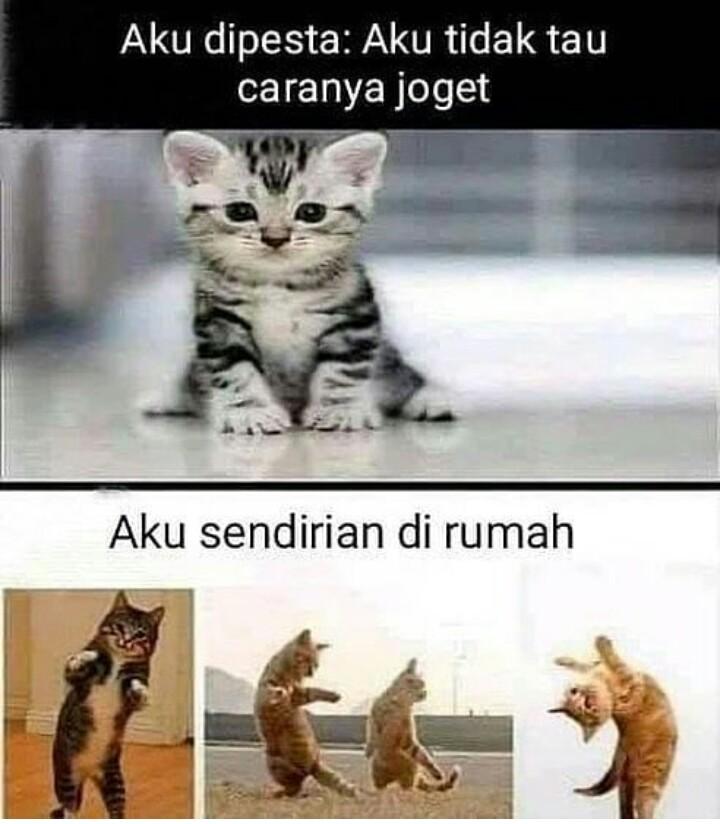 12 Meme kelakuan lucu kucing yang bikin gemas