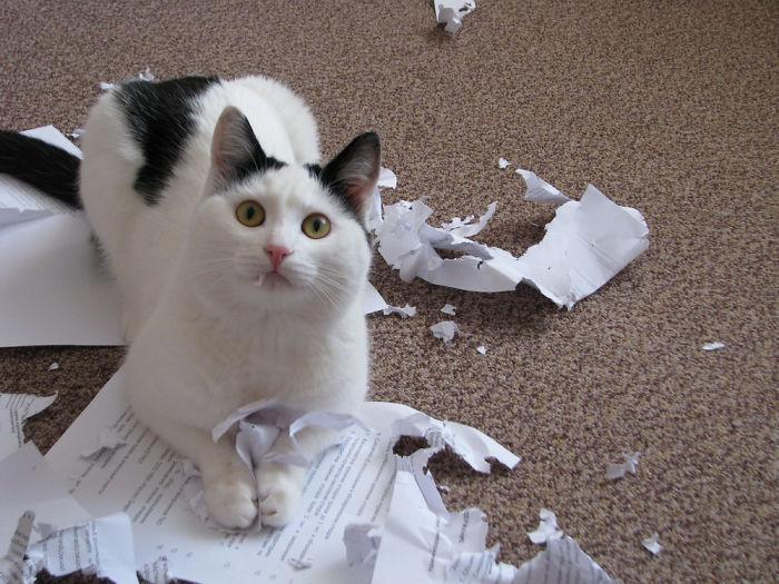 17 Foto kelakuan kucing ini bikin ngelus dada, mohon bersabar ya