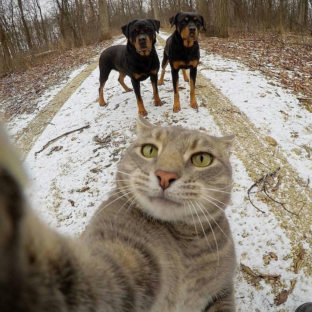 5 Potret ekspresi kucing saat melakukan swafoto ini bikin gemas