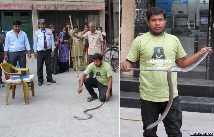 Mau ambil uang di ATM, yang keluar malah ular Kobra
