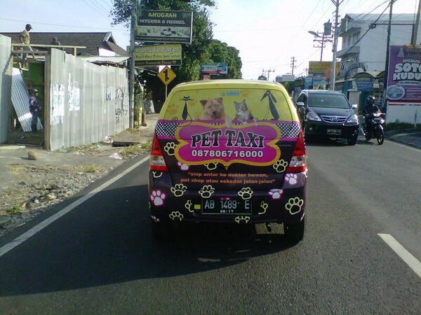Ada-ada saja, bisnis taksi binatang ini laris manis