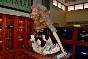 Fosil Mastodon yang hebohkan dunia pada 2014 ada di Indonesia