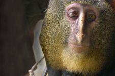 13 Jenis Monyet ini harus kamu tahu karena lucu dan unik banget!