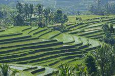 Gara-gara Subak petani di Bali menjadi sangat religius