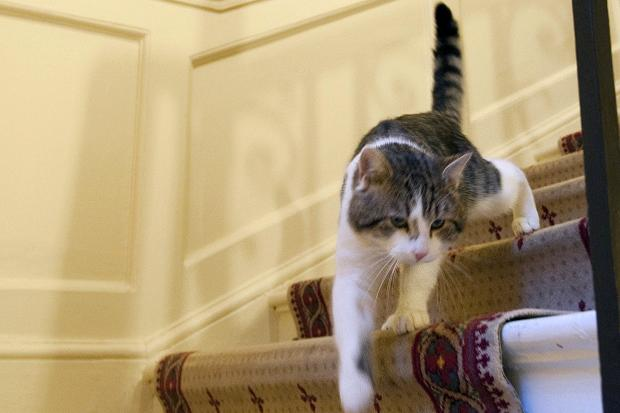 Penjelasan kucing naik turun dilihat dari ekornya