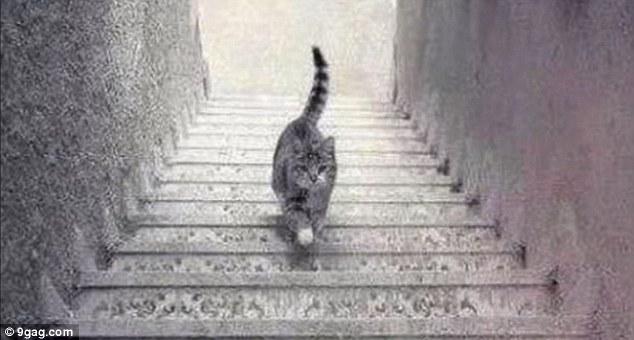 Konstruksi tangga ungkap kucing berjalan turun