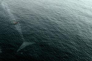 Geger penampakan paus raksasa tertangkap kamera picu perdebatan
