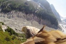 VIDEO: Pemandangan menakjubkan dari kamera di sayap burung elang
