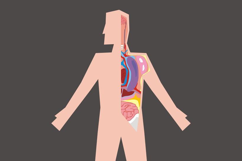 15 Fakta tentang tubuh yang mungkin belum kamu tahu