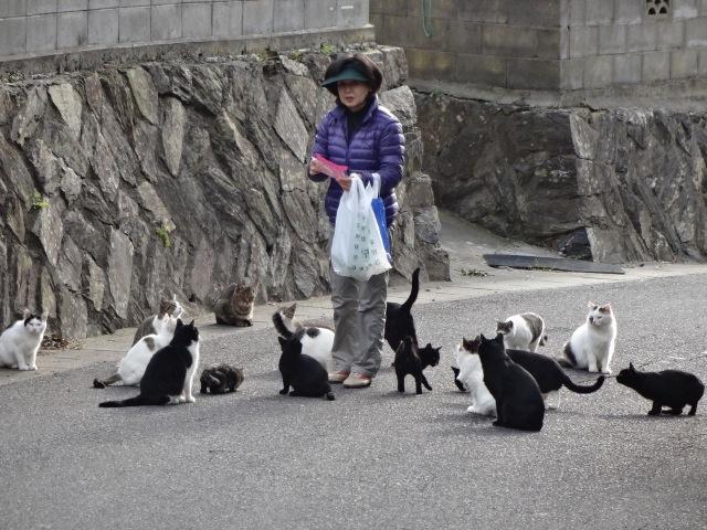 Di pulau ini populasi kucing lebih banyak dari manusianya