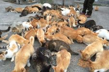 Orang yang alergi terhadap kucing lebih berisiko terkena glaukoma