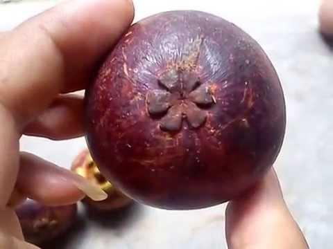 Ini awal mula munculnya peribahasa 'tebak-tebak buah manggis'