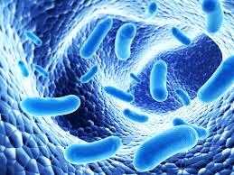 Manfaat probiotik yang perlu kamu tahu