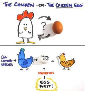 VIDEO: Lebih dulu ayam atau telur? Lihat penjelasan ini
