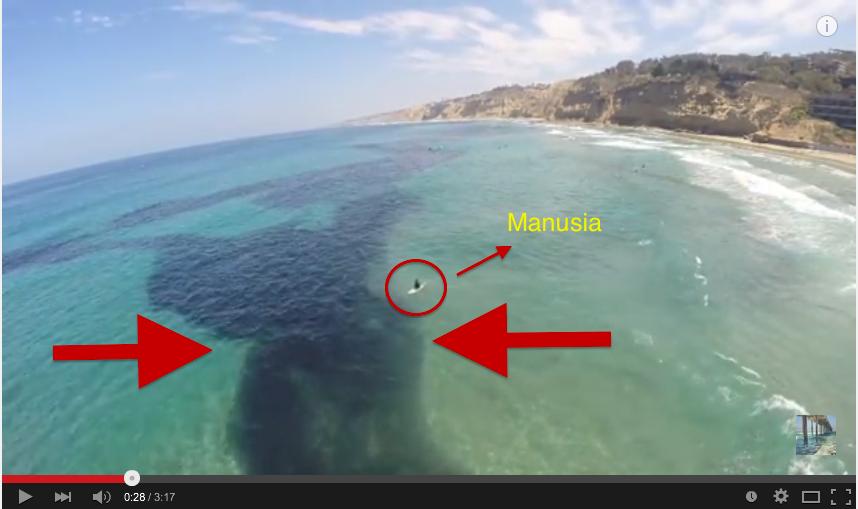 Bukan tumpahan minyak, melainkan makhluk di laut!