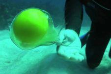 VIDEO: Ini yang terjadi saat kamu menetaskan telur dalam air