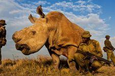Mau punah, badak jantan ini dijaga 24 jam oleh pasukan bersenjata