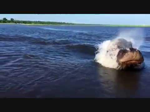 VIDEO: Hewan apakah ini, monster lautkah?