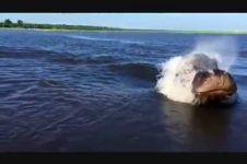 VIDEO: Hewan apakah ini, monster laut?