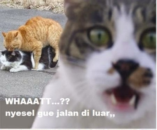 25 Meme Kucing Yang Imut Ngegemesin Dan Bikin Ketawa