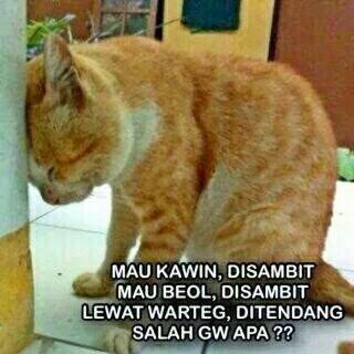 25 Meme kucing yang imut, ngegemesin dan bikin ketawa